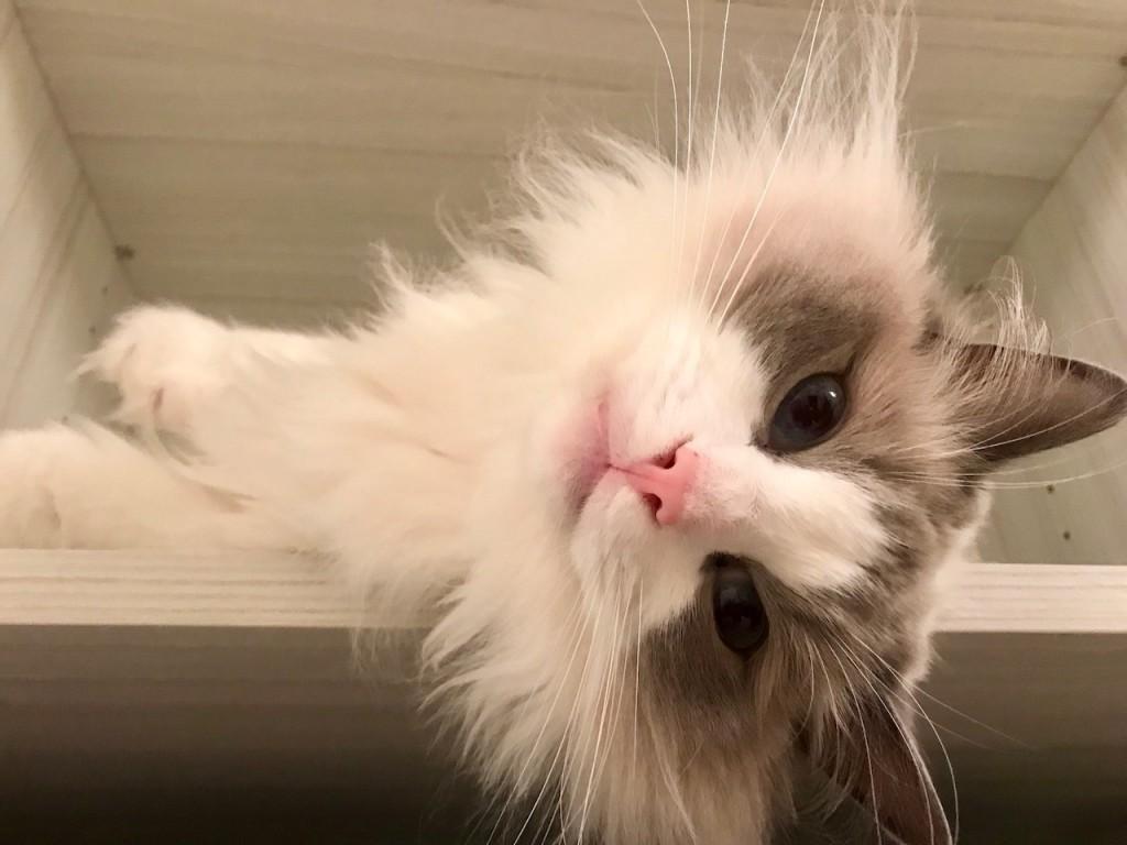 Good cat Lucretius_Resident of DC_1280
