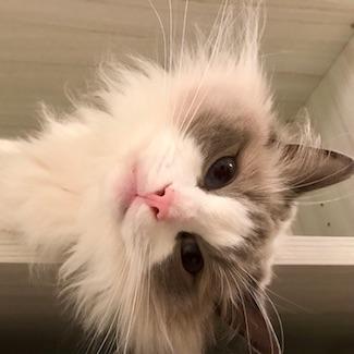 Good cat Lucretius_Resident of DC_325